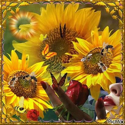Sunflower Animated Gifs Sunflowers Animation Picmix Uploaded
