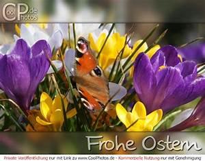 Schöne Ostertage Bilder : osterkarten frohe ostern ~ Orissabook.com Haus und Dekorationen