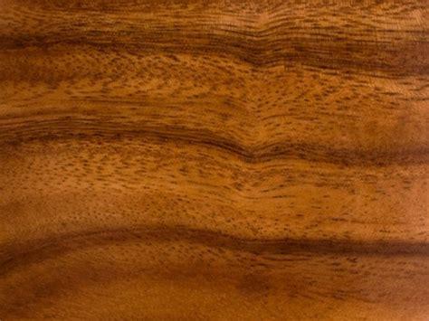 acasia wood characteristics of acacia wood urbanara uk