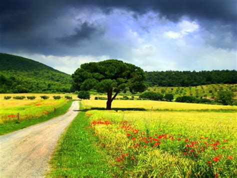 spring road fields nature background wallpapers