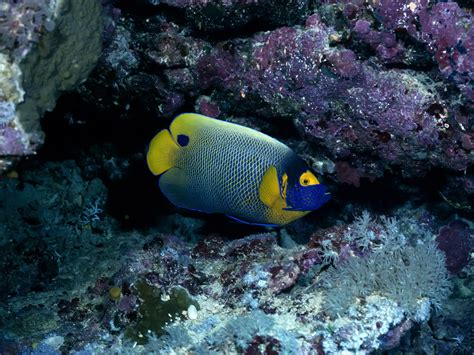 wallpapers colorful fish wallpapers