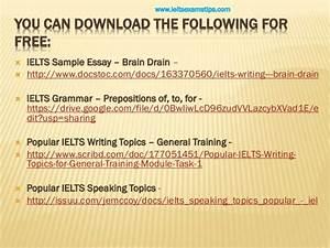essay on brain