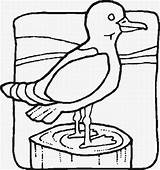 Coloring Pages Birds Seagull Cliparts Jail Cell Clip Chain Tattoo Bird Draw Motorcycle Arms Muscle Clipart Cartoon Clipartbest Coloringpages101 Tweety sketch template