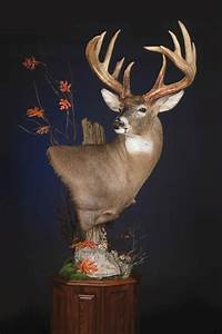 1000+ images about Whitetail mounts on Pinterest Horns