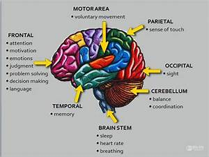 The Basic Facts Your Doctor Didn U2019t Tell You About Brain