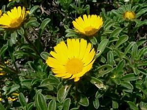 Gelbe Sommerblumen Mehrjährig : sommerblumen helfen ihnen einen garten voller farben zu kreieren ~ Frokenaadalensverden.com Haus und Dekorationen