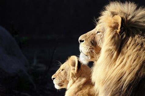 top list   beautiful animal photographs  captured