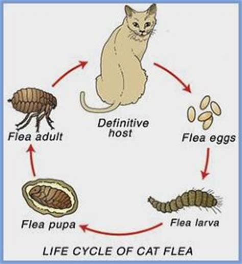 lifespan of a cat canterbury vets ashburton and methven fea and worm control