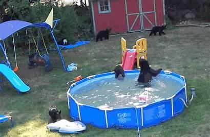 Pool Backyard Private Memes Humans Bears Host