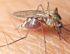 Mücken Im Zimmer Loswerden by M 252 Cken Im Zimmer So Vertreiben Sie Sie
