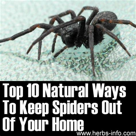keep spiders out of house top 10 ways to keep spiders out of your home 7624