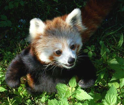 adorable baby animal pictures  pics amazing creatures