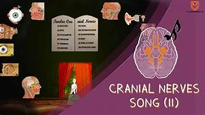 How To Remember The Cranial Nerves - Song Part Ii