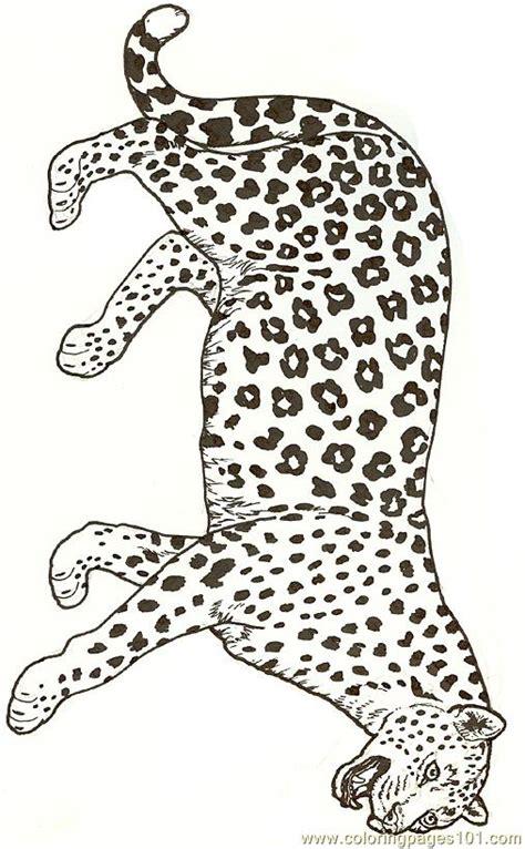 leopard reversed coloring page  jaguar coloring