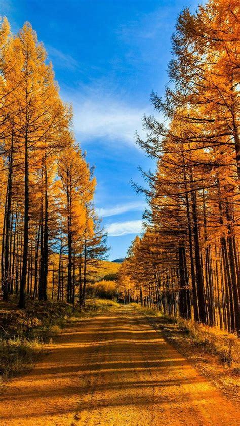 唯美秋风萧瑟,秋天,秋景,手机壁纸,锁屏图片-壁纸族