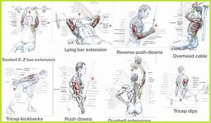 1000  Images About Arm Workouts On Pinterest