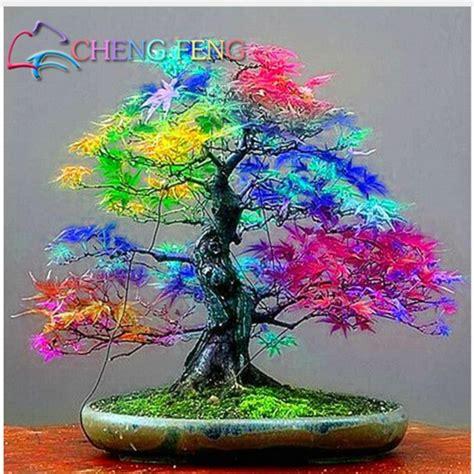 Bonsai Baum Pflanzen by Seltene Mischung Farbe Ahorn Samen Ahorn Samen Bonsai Baum