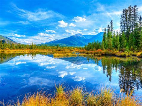 lake  yellow grass pine trees reflecting  blue sky