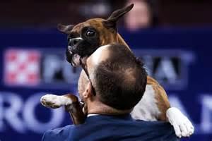 Westminster Dog Show 2017 Rumor