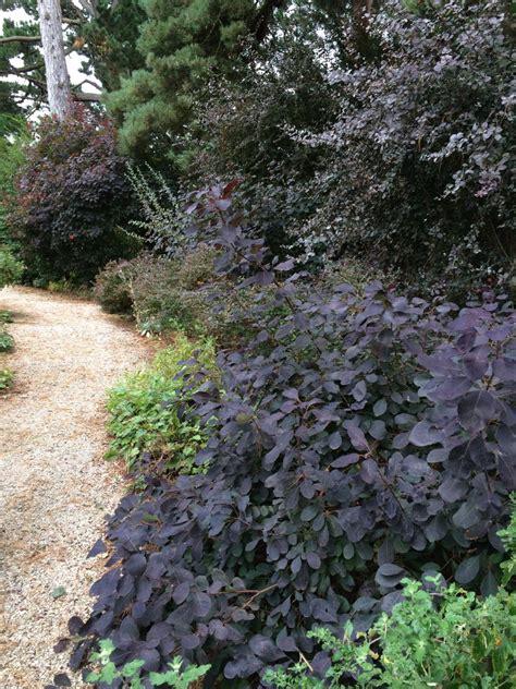burgundy shrubs and bushes burgundy plants and flowers hgtv