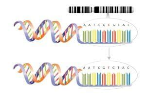substitution mutation definition examples types