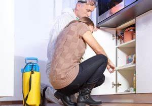 Ameisen Bekämpfen Wohnung : ameisenfalle ameseink der gegen l stige ameisen im haus ~ Michelbontemps.com Haus und Dekorationen