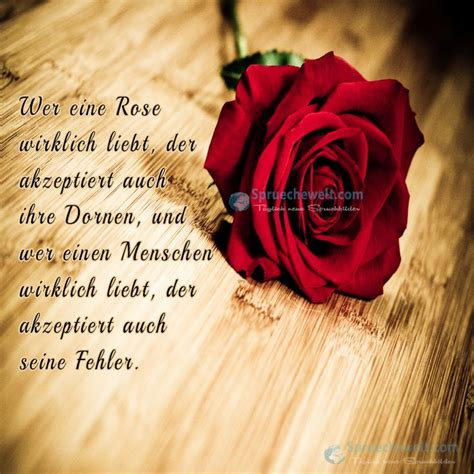 wer eine rose wirklich liebt lebensweisheiten sprueche