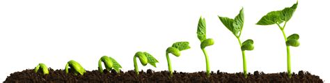 Growing Plants Png Free Growing Plants Png Transparent