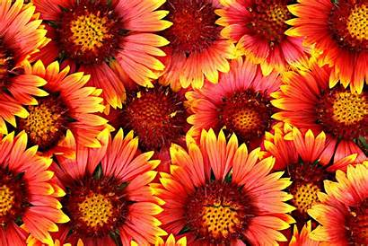 Flowers Background Orange Multi Bebas Font Flower