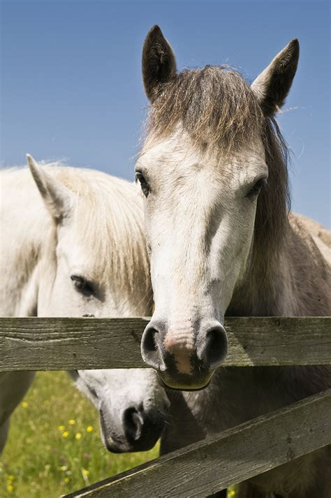 connemara pony linkedin weddingdates