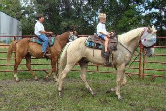 Tennessee Walking Horses   CLOUD 9 WALKERS (Tennessee