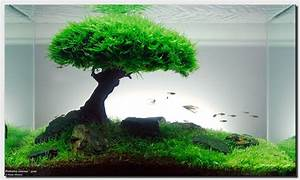 "Aquascape of the Month: September 2008 ""Pinheiro Manso"