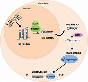 miRNAs as biomarkers in prostate cancer | SpringerLink