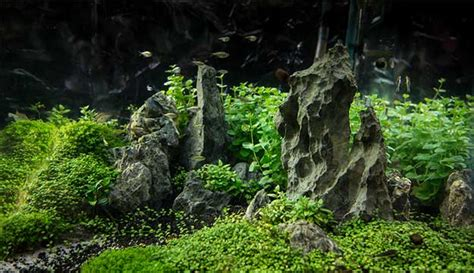Aquascape Substrate by A Guide To Aquascaping The Planted Aquarium