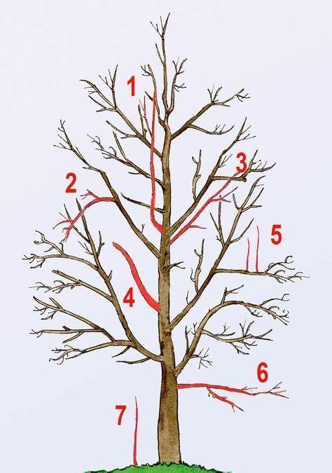 obstbaumschnitt tipps tricks obstbaeume schneiden