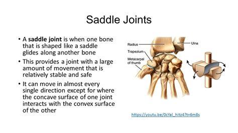 saddle joint anatomy saddles result physiology horse information google