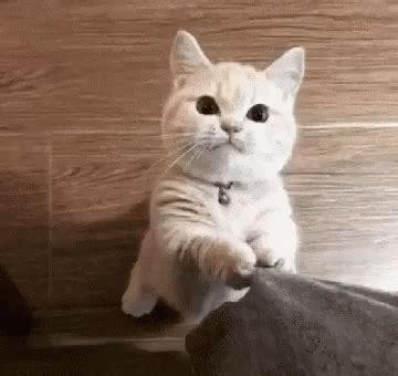 cute cute cat gifs tenor