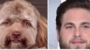 Bizarre dog with 'HUMAN FACE' people who see striking ...