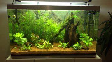 le pot de fleur en terre cuite un danger pour vos poissons