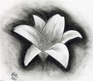 Charcoal Flower Drawing Easy Charcoal Sketches Of Flowers