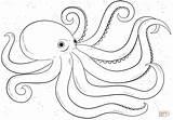 Coloring Octopus Popular sketch template