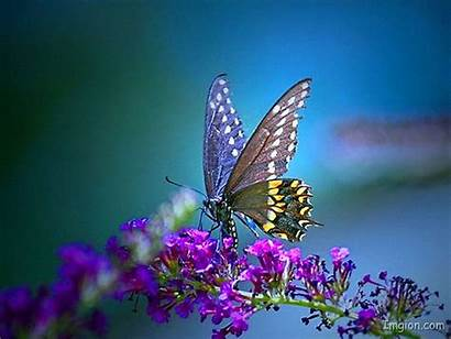 Butterfly Pretty Backgrounds Wallpapers