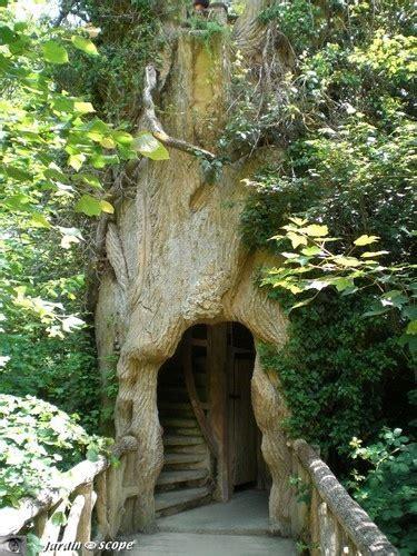 foto particolari alberi abitare la natura