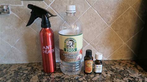 natural ant control  essential oils diy ant spray