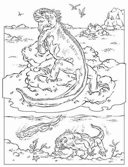 Coloring Galapagos Pages Iguana Marine Animals Iguanas