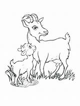 Goat Billy Goats Gruff Coloring Drawing Three Getdrawings Drawings Printable Getcolorings Paintingvalley sketch template