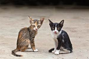 Help Homeless Cats. Donate Today And Your Gift Does Twice ...