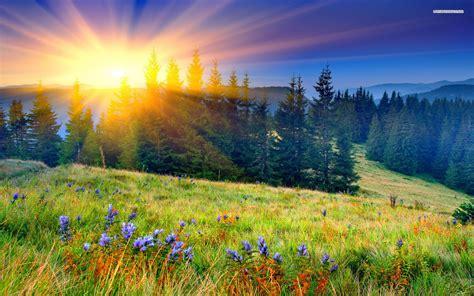 Spring Sunrise Wallpaper
