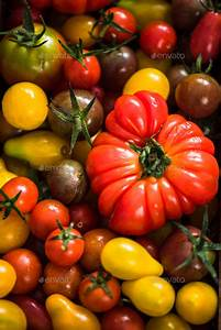 Close view on farm fresh tomatoes Stock Photo by merc67 ...