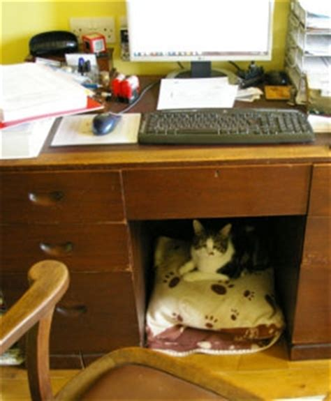 The Desk by Finds Purrfect Owners